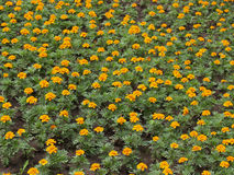 Blumen [3] Stockfotos
