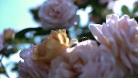 Blumen stock footage