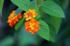 Blumen Stockfotografie