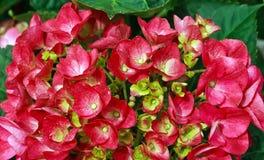 Blumen 15 Stockbild