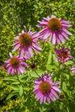 5 Blumen Stockbild