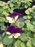 Blumen stockbild