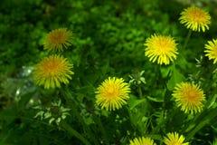 Blumen Stockbilder