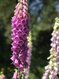 Blumen Lizenzfreie Stockfotografie