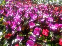 Blumen-Blumen Stockbild