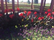 Blumen aller Farben Stockbild