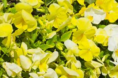 Blumen als Hintergrund Stockbild