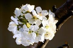 Blumen als Sonnenuntergang lizenzfreies stockbild