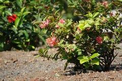 Blumen-Anlage auf kleinen Felsen stockfotografie