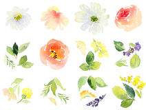 Blumen-Aquarell Stockfotos