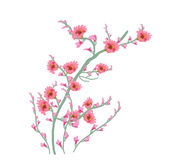 Blumen-Art Watercolor-Malereiblumenrosa Lizenzfreie Stockfotos