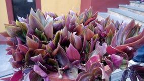 Blumen Atlixco lizenzfreies stockbild