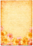 Blumen auf altem Papier Stockfoto
