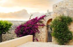 Blumen auf altem sizilianischem Haus Stockfotografie