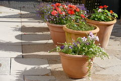 Blumen auf Anzeige lizenzfreie stockfotografie