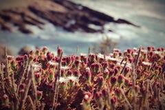 Blumen auf Berge nahe dem SAE Lizenzfreie Stockfotografie