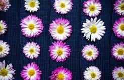 Blumen auf blauem Gewebe mit einem Muster, Naturhintergrund, Tapete Lizenzfreies Stockfoto