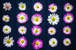 Blumen auf blauem Gewebe mit einem Muster, Naturhintergrund, Tapete Stockfoto