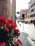 Blumen auf Borgo Pio in Rom, Italien Lizenzfreies Stockfoto