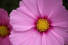 Blumen auf criffel Stockbild