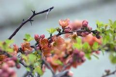 Blumen auf dem Baum Stockbilder