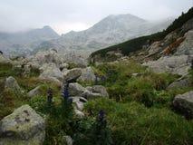 Blumen auf dem Berg Stockfotografie