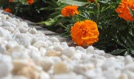 Blumen auf dem Blumenbeet Stockfotografie