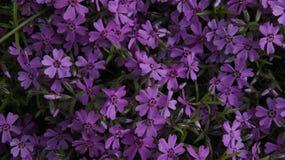 Blumen auf dem Feld Stockbilder