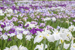 Blumen auf dem Gebiet Stockfoto