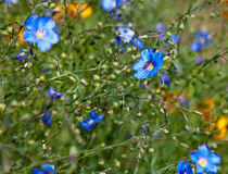 Blumen auf dem Gebiet Stockbilder
