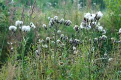 Blumen auf dem Gebiet Lizenzfreies Stockfoto
