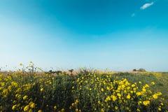 Blumen auf dem Gebiet, niederländische Landschaft, volgermeerpolder lizenzfreies stockbild