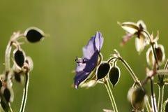 Blumen auf dem grünen Hintergrund Stockfotografie