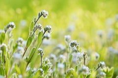 Blumen auf dem grünen Hintergrund Stockbilder