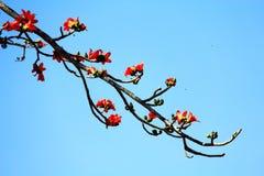 Blumen auf dem Hügel Stockfotografie