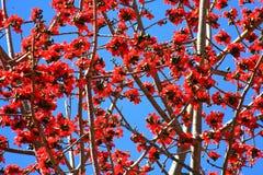 Blumen auf dem Hügel Lizenzfreie Stockfotos