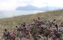 Blumen auf dem Hügel durch das Meer Lizenzfreies Stockbild
