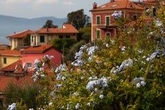 Blumen auf dem Hintergrund der alten Stadt lizenzfreies stockbild