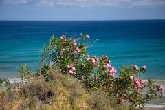 Blumen auf dem Küstenkanarienvogel, Küstenlinie Stockfotos