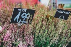 Blumen auf dem Markt mit einem Preis Stockfotos