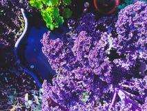 Blumen auf dem Pool Lizenzfreie Stockfotografie