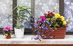 Blumen auf dem Portal Stockbilder