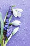Blumen auf dem Purpur Lizenzfreie Stockfotografie