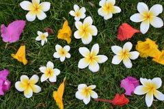 Blumen auf dem Rasen Lizenzfreies Stockfoto