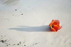Blumen auf dem Sand. Lizenzfreie Stockfotografie