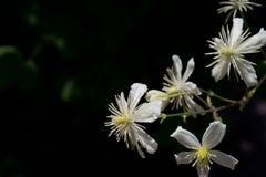 Blumen auf dem schwarzen Hintergrund Stockbild