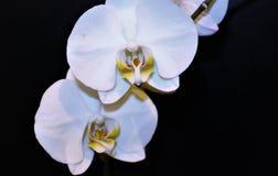 Blumen auf dem schwarzen Hintergrund Lizenzfreie Stockfotos