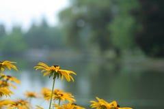 Blumen auf dem See lizenzfreies stockfoto