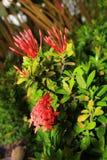 Blumen auf dem Straßenrand Lizenzfreie Stockfotos