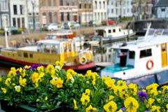 Blumen auf den Straßen von Gorinchem Lizenzfreie Stockfotografie